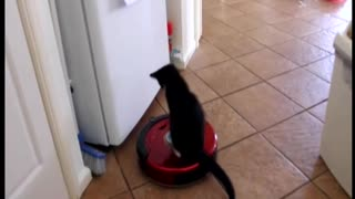 Kitten Gives Darth Vader-Like Vibes While Riding Robot Vacuum - Video