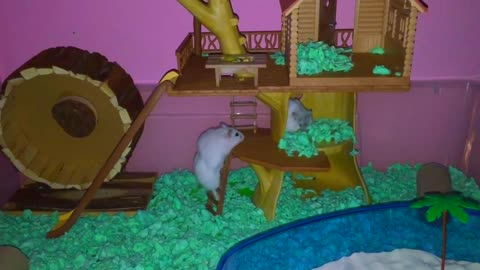 Hamsters go absolutely nuts for new treehouse!