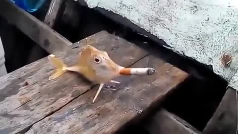 Fish Smoking Cigaret
