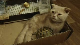 Cat and turtle share unlikely friendship - Video