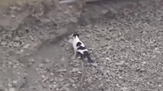 Puppy is stuck in a deep ditch, but then this cat shows up…