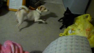 Dog and cat funny video - Video