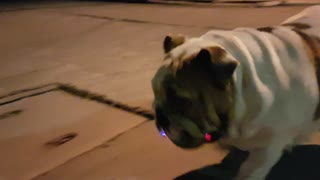 Disco Bulldog  - Video