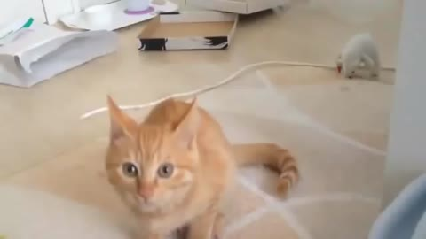My cat said - hey stop filming me :)