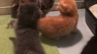 Kittens coward  - Video