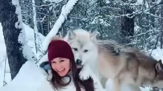 Trained wolf gives woman a kiss during photoshoot