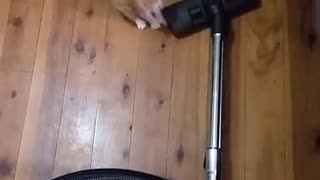Vacuum cleaner surprises tiny kitten - Video