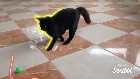 The cat plays with the ball, celebrity video in the spotlight