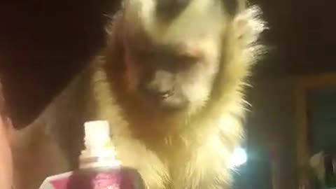 Monkey loves HEB squeeze me