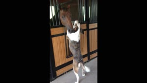Horse and dog have an unlikely friendship - Video