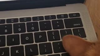Cat refuses to get off keyboard, becomes part of 'enter' key
