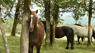 What Really Goes on Behind the Scenes – HORSE ABUSE - Video