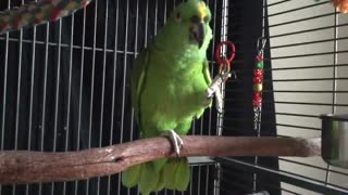 Parrot tricks plays catch with a ball!