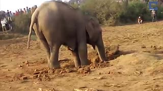 Mother Spends 11 Hours Rescuing Baby Elephant Stuck in Well - Video