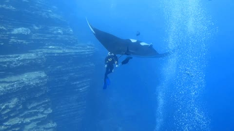 Up close and personal: Divers encounter Giant Manta Ray during their dive