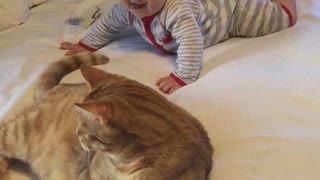 Baby can't stop laughing at playful cat - Video