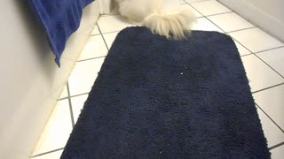 Kitten loves to explore the bathroom - Video
