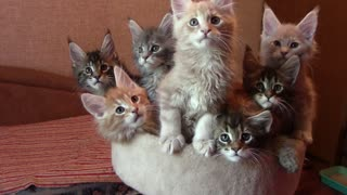 A Bouquet of Kittens - Video