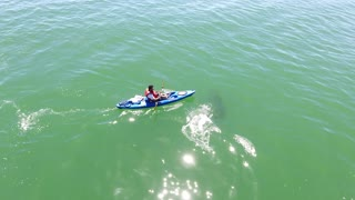 White Shark Investigating Kayak - Video