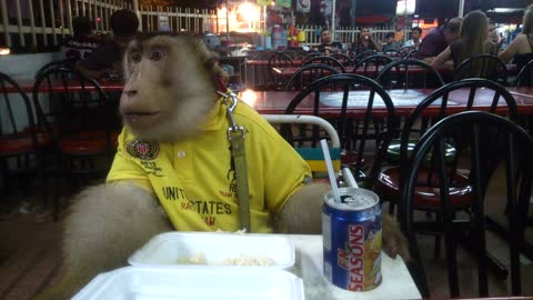 Monkey casually enjoys restaurant dinner