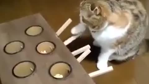 Cat play the mouse toy