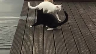 Swimming Cat - Video