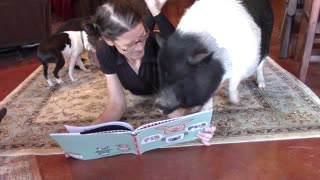 Pets patiently gather around owner for story time - Video