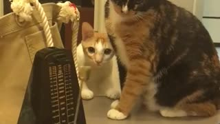Funny cat funny Kitty 2016 funny video moments animal 2016 - Video