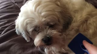 I guess my dog doesn't want to be brushed! - Video