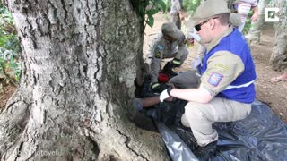 Boy Stuck In Tree Trunk - Video