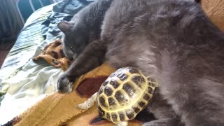 The cat and turtle sleep together and him it is good  - Video
