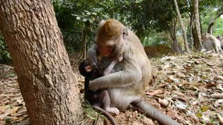 Cute Baby Monkey Miranda  - Video