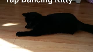 marley  the tap dancing  kitty - Video