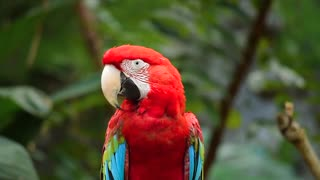 Beautiful African parrot
