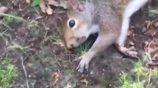 Squirrel on Shrooms - Video