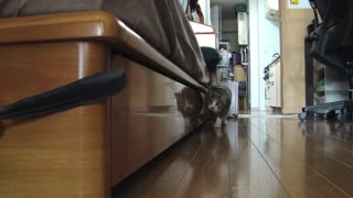 Scary cat stalk 2 - Video