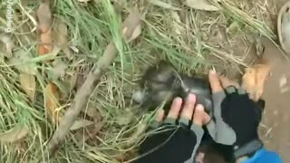 This Man Is Trying To Save A Drowning Puppy's Life - Video