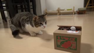 The sweet kitten played without a borden - Video