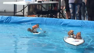 Squirrel Water Skiing