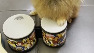 Clever Doggy Drums up a Treat