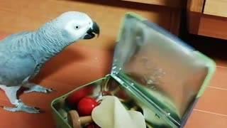 Smart parrot knows how to open up his toy box