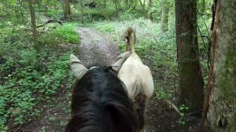 Trail ride with happy and curious  foal