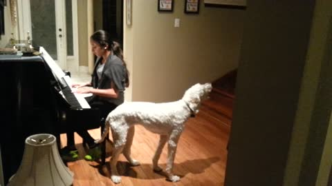 Dog Howls Along With Piano Playing Teen