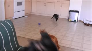 Unaware Puppy didn't even know what was coming!  - Video