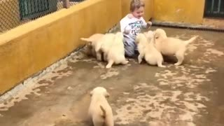 My son play with puppies in the farm