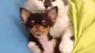 When A Cat Meets A Dogs... You've Just Gotta See This!
