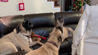 Dogs Join in to sing Happy Birthday
