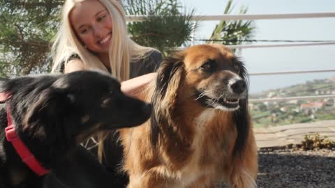 A Smiling Girl Is Petting Dogs 1#