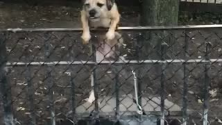 Music brown dog struggles to climb over a fence at a park  - Video