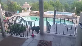 Mama Bear and Cubs Splash Around - Video